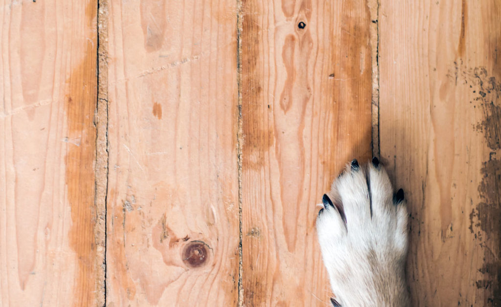 dog on wooden floor